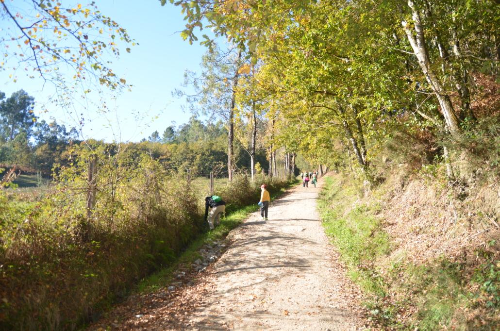 LIBERA: Objetivo liberar a la naturaleza- Limpiando el Camino