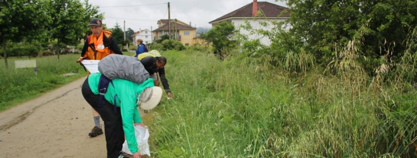 Día mundial del Medio Ambiente siendo Ecoperegrino - peregrinos participando recogiendo basura